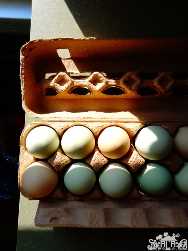 better eggs from the farmer's market in #Chestertown,MD from Shalavee.com
