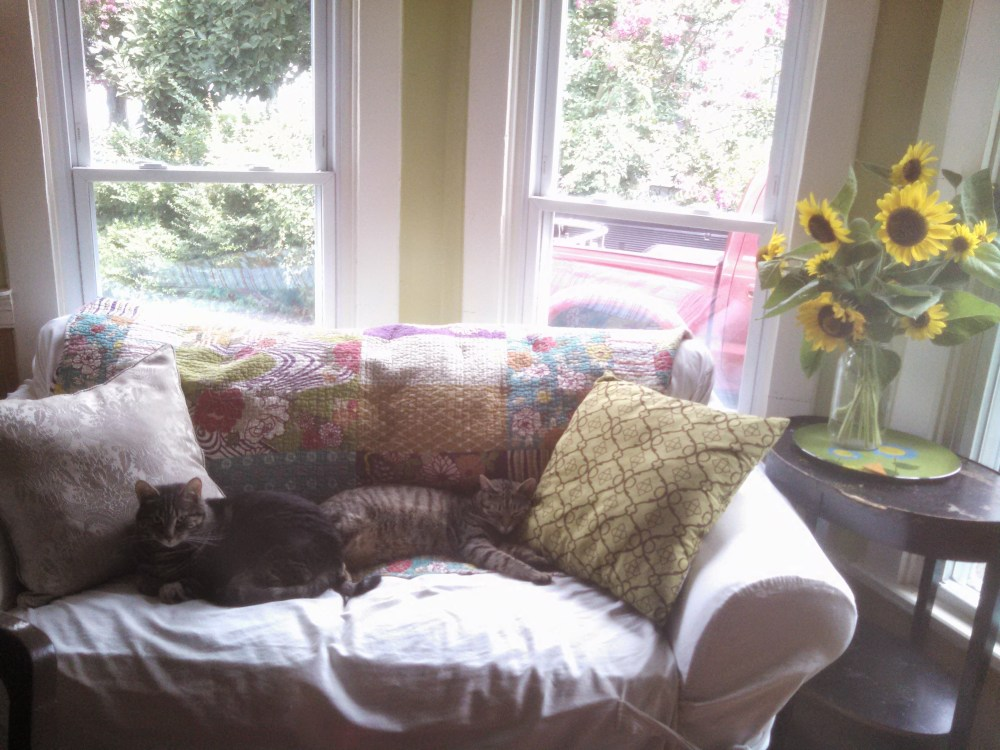 cats on the sofa with sunflowers