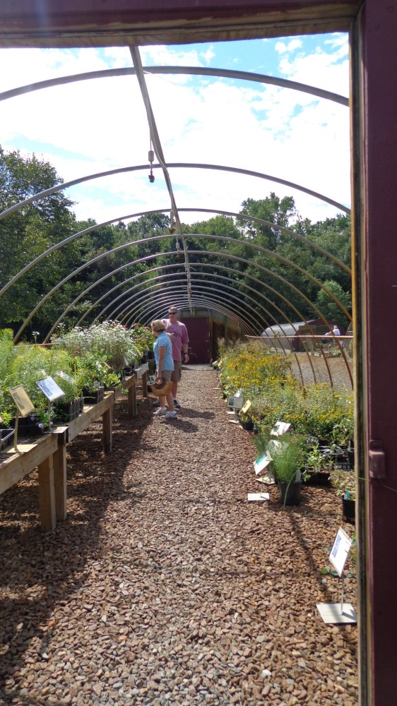 wandering through the native plant sale at the Adkins Arboretum on Shalavee.com