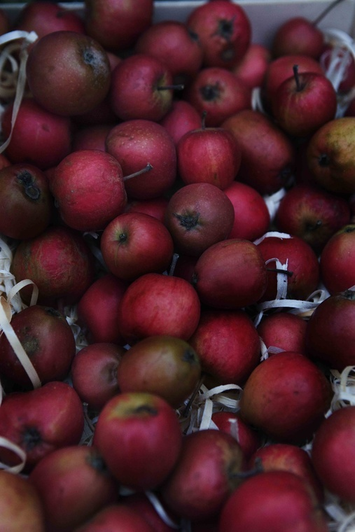 Gorgeous apples on Shalavee.com