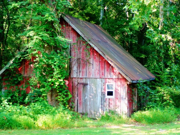 hidden barn near Chesapeake College on Shalavee.com