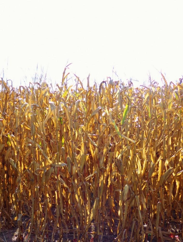 crops on Shalavee.com