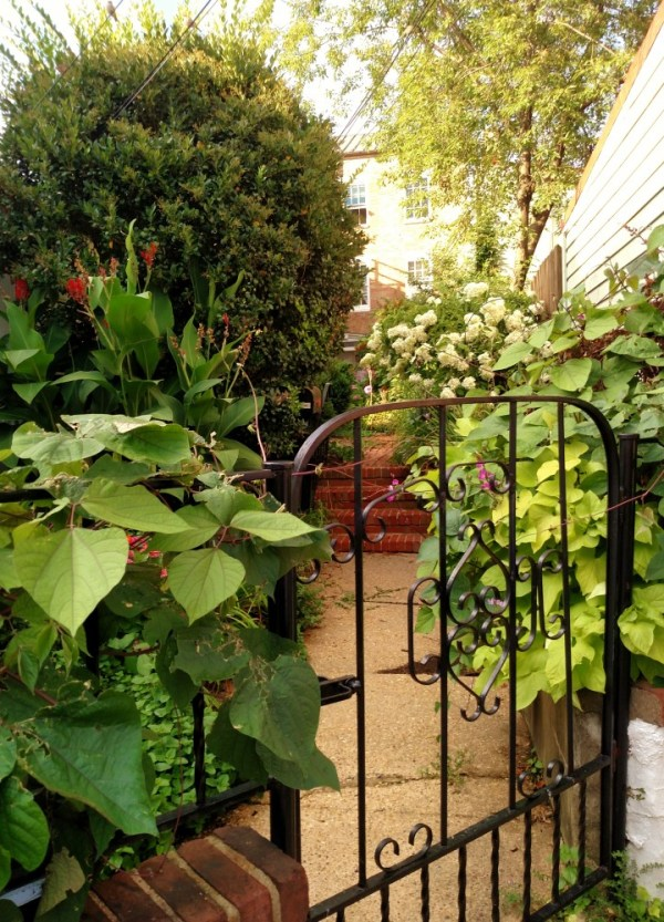 A courtyard in Annapolis on Shalavee.com