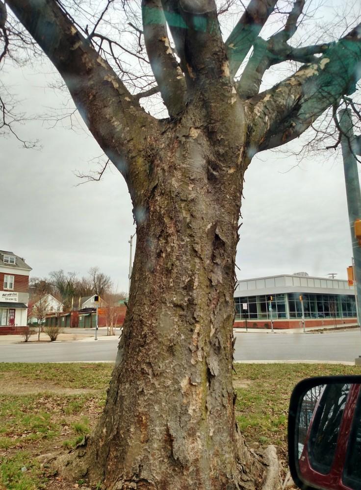 the neighborhood where I grew up in Baltimore on Shalavee.com