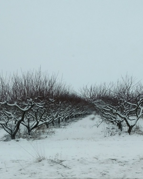 The last of winter in the orchard on Shalavee.com