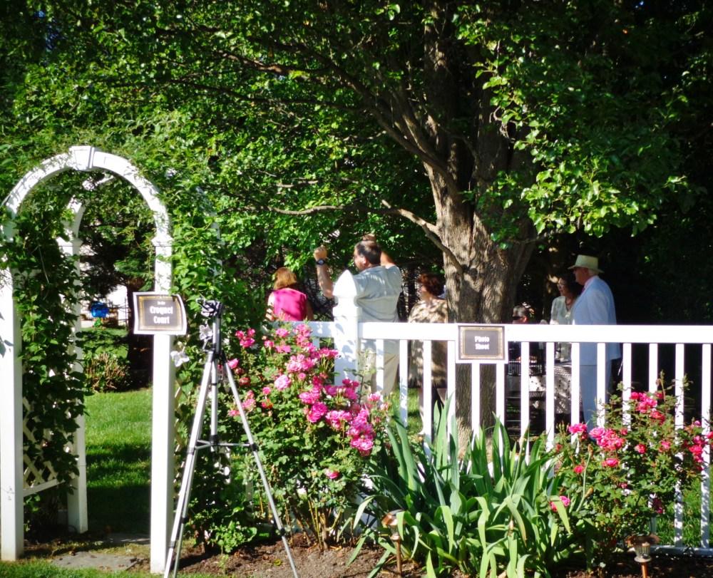 Gatsby garden party on Shalavee.com