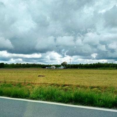 Eastern Shore field on Shalavee.com