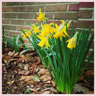 I'd Rather Do Spring on Shalavee.com
