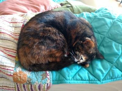 Endure and Enjoy like a cat on Shalavee.com