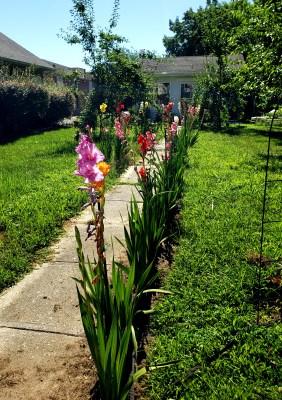 a summer morning walk in Denton on Shalavee.com