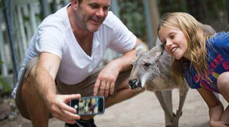 Australian red kangaroo - Credit Jungle Island