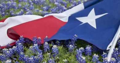 Low angle view of a Texas flags laying among bluebonnet flowers on a bright spring day in the Texas Hill Country