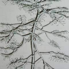 Callum's Tree