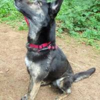 Rescue Dogs Special Appeals  -  Barker