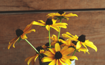 3 ways to use calendula herb for happy skin