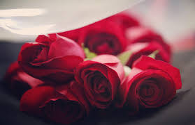 red-roses-#fridayfiction- floral-bouquet-two-dozen-dating