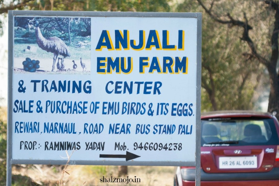 A2Z-BADGE-2017-blogging-challenge-theme-reveal-travel-stories-picture-speaks-louder-than-words-april-shalzmojosays- emu-farms-rewari-shekhawati-eggs-roadtrip