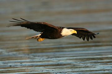Single-Eagle5-13