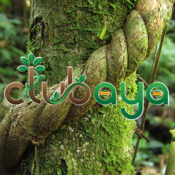ClubAYA – Ayahuasca Healing Center – Panama