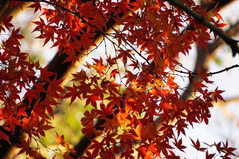 Гуляла в окрестностях Икебукуро, нашла храм. Вот, например — все по календарю.