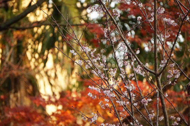 Я, конечно, сакуру и от яблони не отличу, поэтому японским дедам в плане деревьев доверяю.