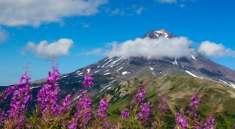 Цветочные луга Камчатки уходят за облака.