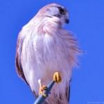 Weekly Photo Challenge – Free Spirit
