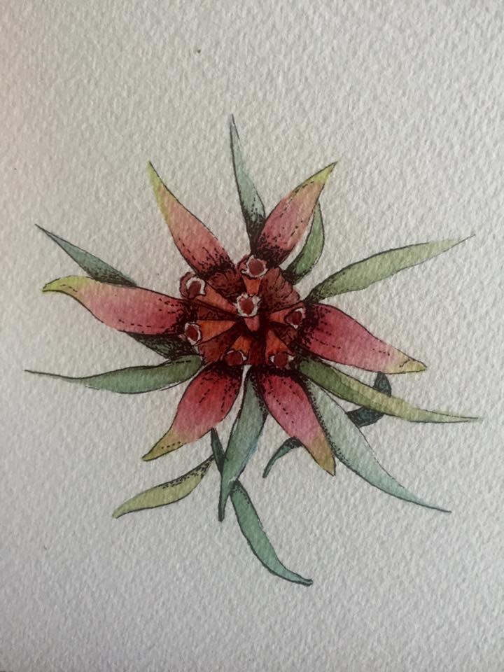 Mountain Devil flower.