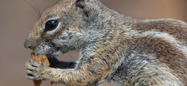 Learning From Squirrels: Two Traits to Embody