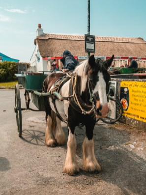 Auch eine Kutschfahrt ist auf Inishmore möglich | Also a ride with a jaunting car is possible to discover Inishmore