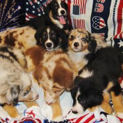 Baby Boy Doll High Chair Painted Tables And Chairs Shamrock Rose Aussies - Welcome To Aussies!! :)  Exciting News!!! 2 Litters ...
