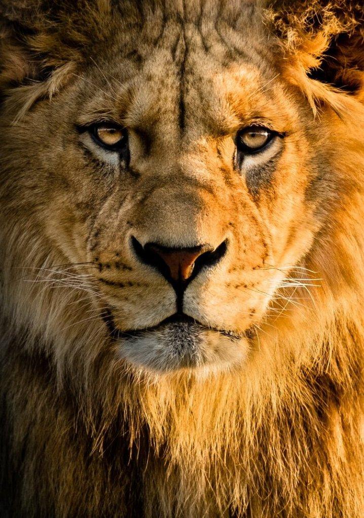 Unleash Your Lion!