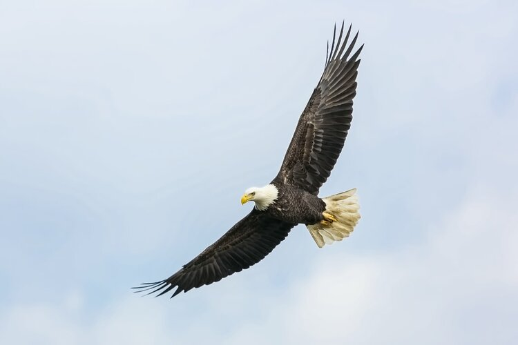 Soar like an Eagle (5 Tips to Be Fearless)