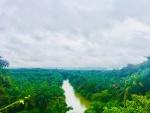Monkeying around in the Sumatran jungle