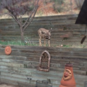 A visitor in the back yard.