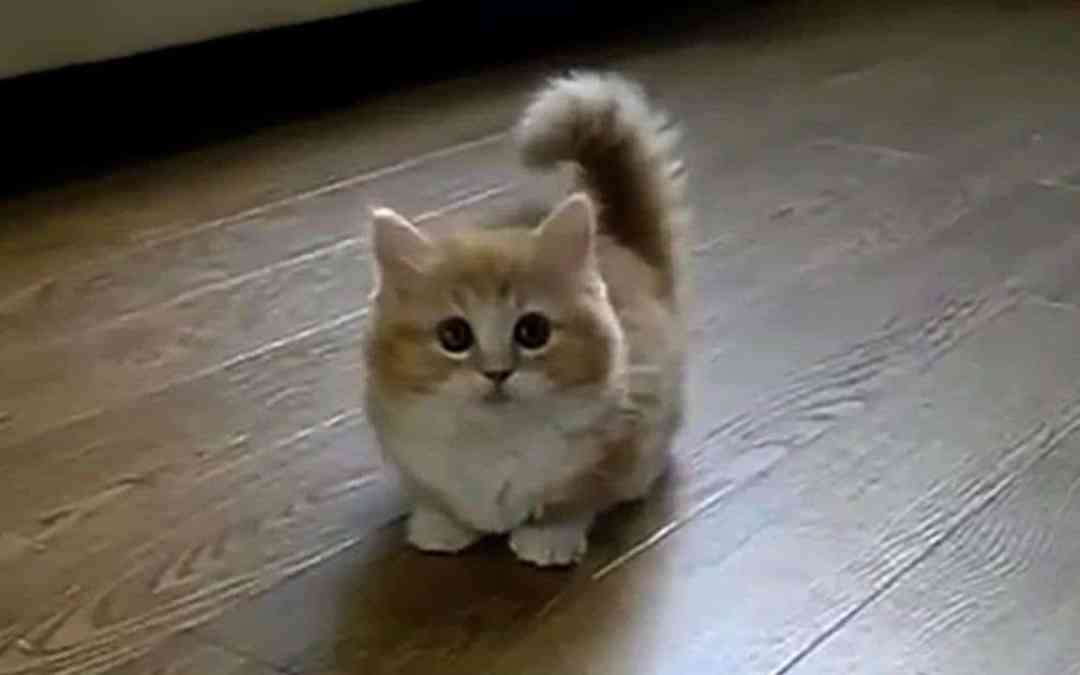 YouTube Video – The Best Cat Video you will Ever See !