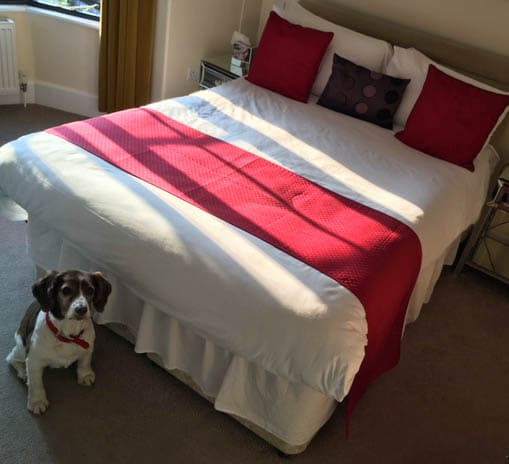 The Royal Hotel Eastbourne, Dog Friendly Hotel Room