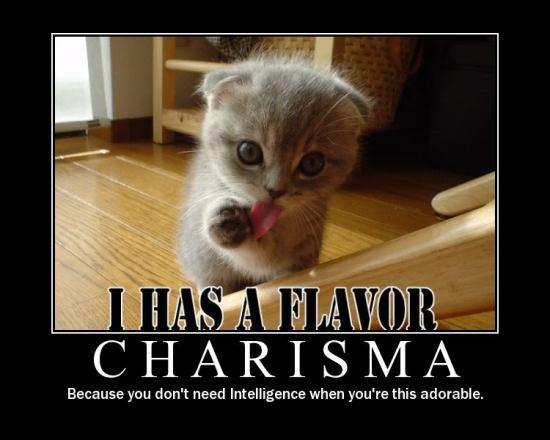 cat charisma meme