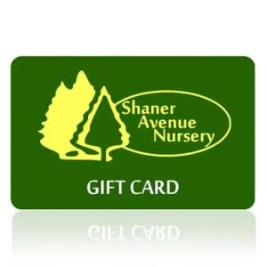 Shaner Avenue Nursery Gift Card Art