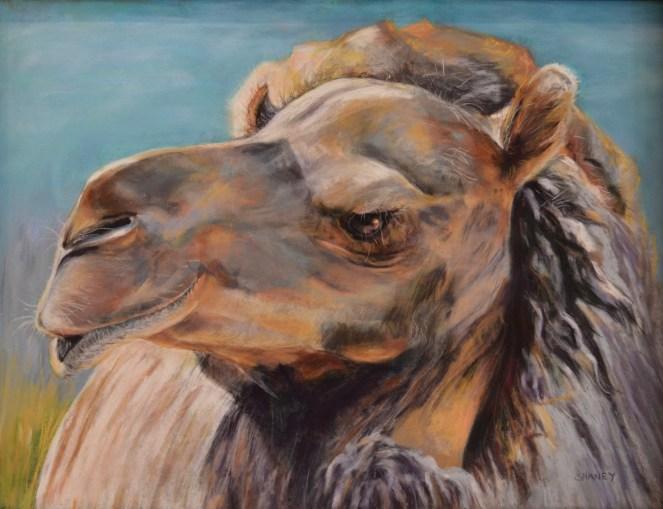 Cibelo Camel - SOLD