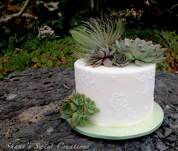 Rustic cake with succulents