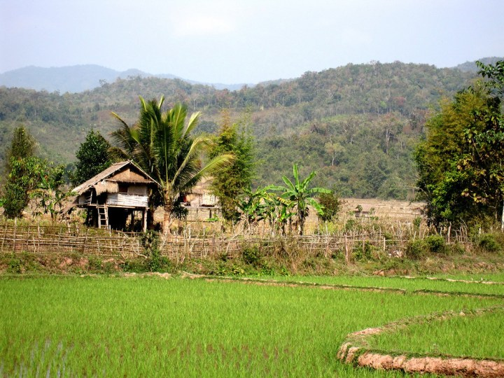 rice paddies in rural laos