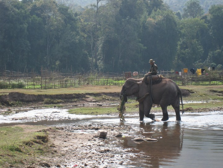 logging elephant in laos