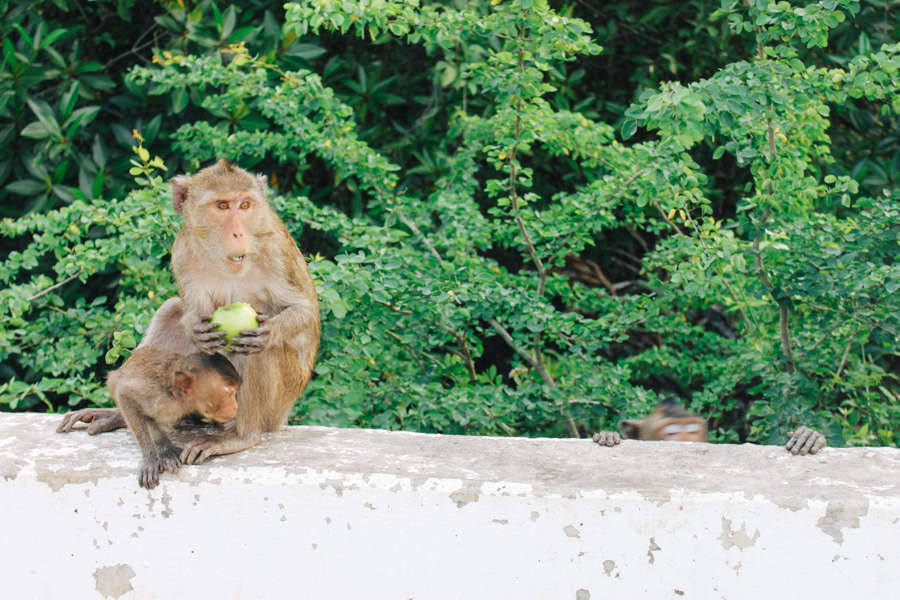 Roadside monkeys in Thailand.