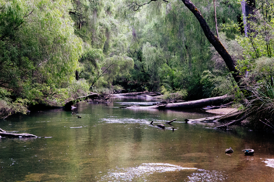 South Western Australia clean river.