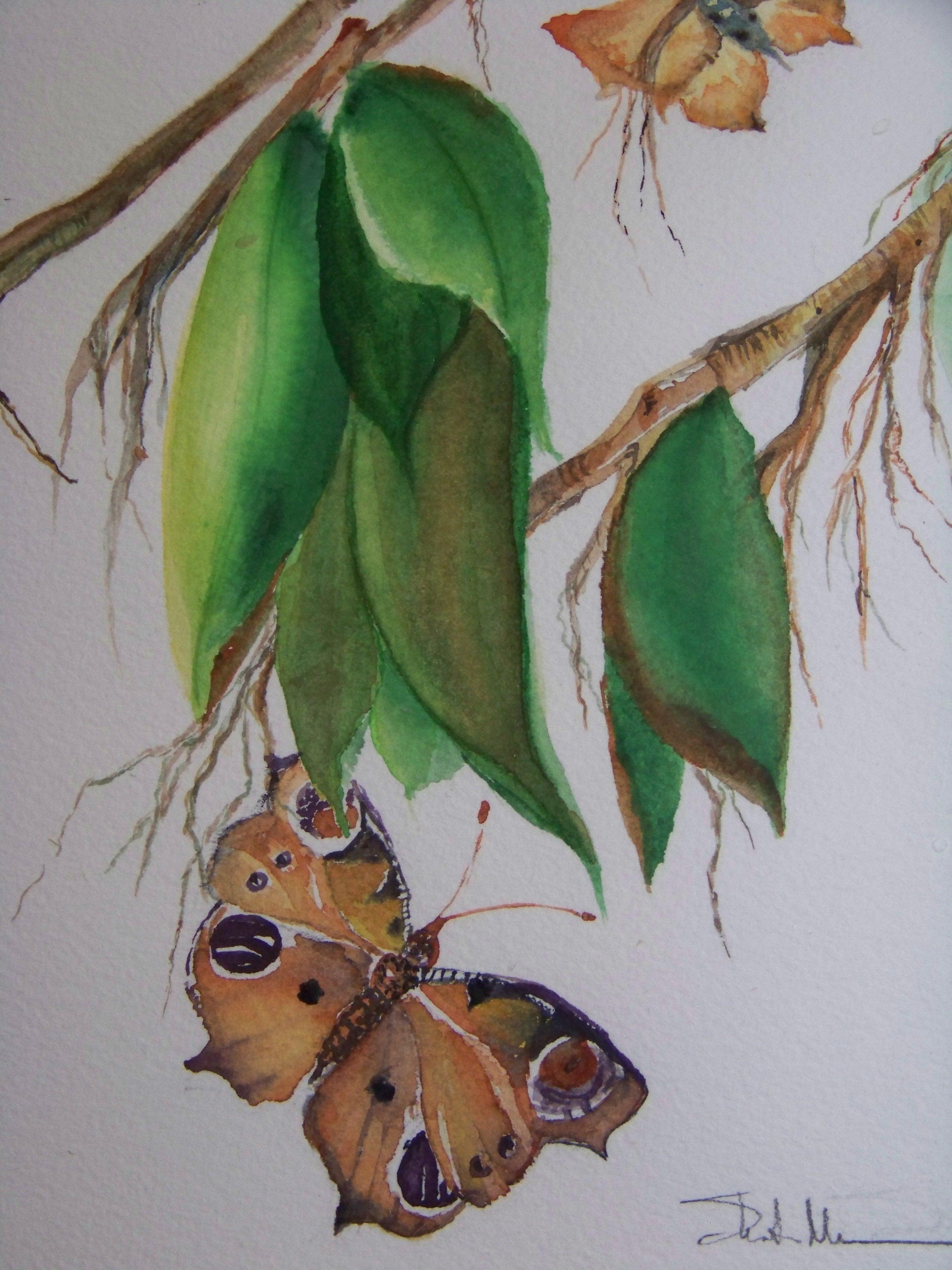 Butterfly morn