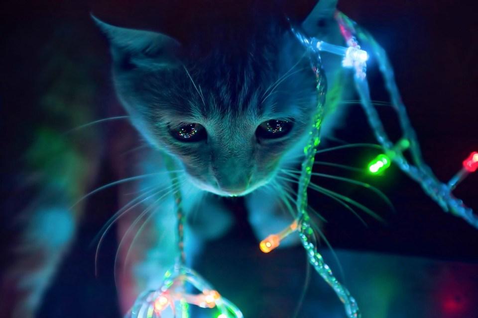3d animated cat in