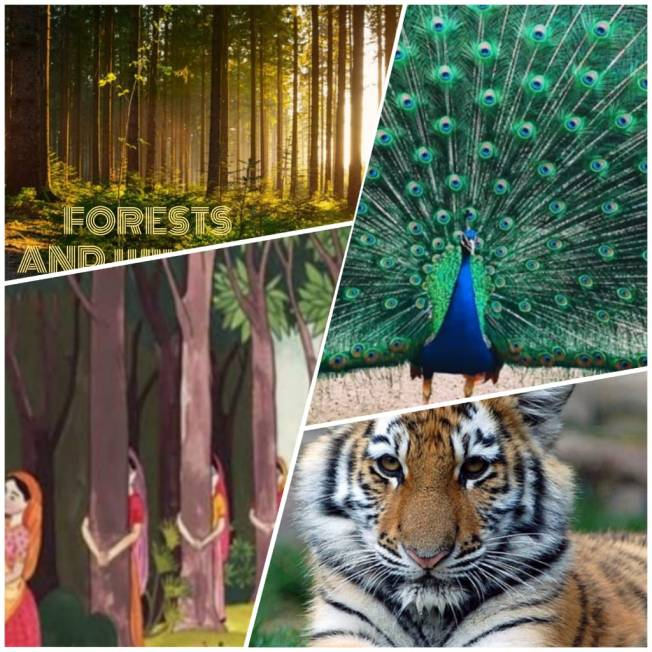 Class X Geography Lesson Plan On Forest and Wildlife Resources With Activities