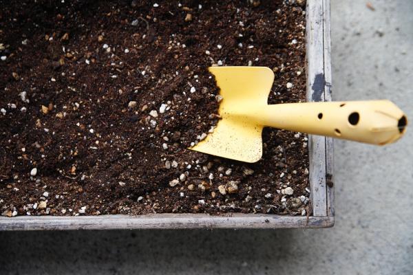レタスの栽培方法【プランター】!栽培時期や害虫対策について