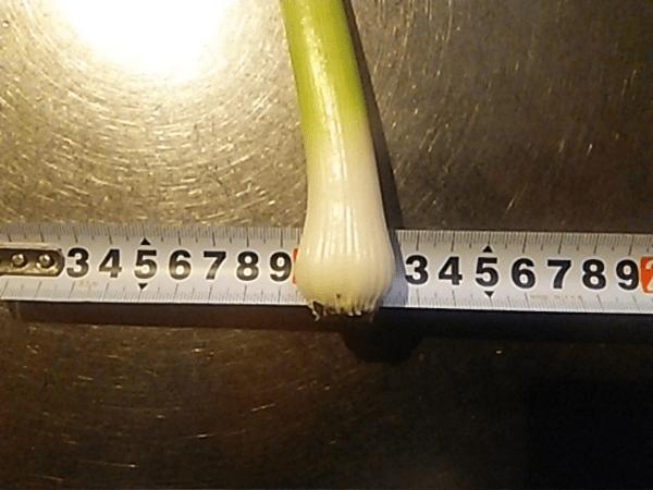 にんにくをプランターで栽培する方法。育て方のコツを解説